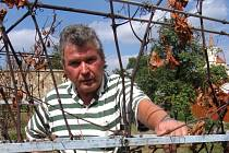 Jaroslav Dolský na své spálené vinici