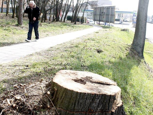 Pracovníci Městské zeleně Znojmo čistí lesík Pod Soudním vrchem, ošetřují také stromky na Komenského náměstí ve Znojmě.