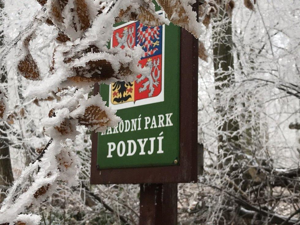 Dříve téměř bez lidí dnes davy turistů. Národní park Podyjí na Znojemsku navštěvují v době Covidu lidé i v zimě.