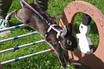 Tři desítky soutěžících přijely na první soutěž v králičím hopu ve Znojmě.