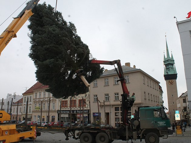 Čtrnáctimetrová jedle z lesa u Ctidružic stojí na Horním náměstí ve Znojmě. 1. listopadu se slavnostně rozsvítí pro dokreslení vánoční atmosféry.