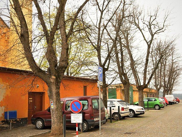 Řada javorů horských v ulici Přemyslovců ve Znojmě ještě nezačala rašit a stromy svým vhledem spíše připomínají zimní časy. Podle aktivistů i odborníků jde o nevhodný druh pro Dolní park.
