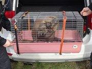 Zraněného bobra, který ležel bezmocně na břehu Dyje ve Znojmě, pomáhali ve středu zachránit strážníci.