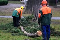 Plánované kácení stromů v Dolním parku.