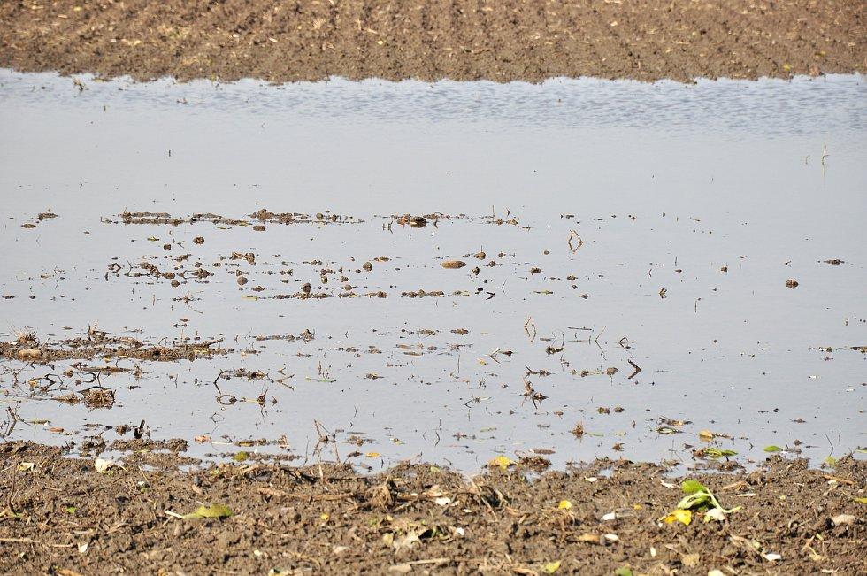 S podmáčenou půdou po deštích a záplavách se potýkají zemědělci. Obávají se o sklizeň i orbu.