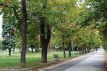 Alej v Horním parku poskytuje v parném létě potřebný stín.