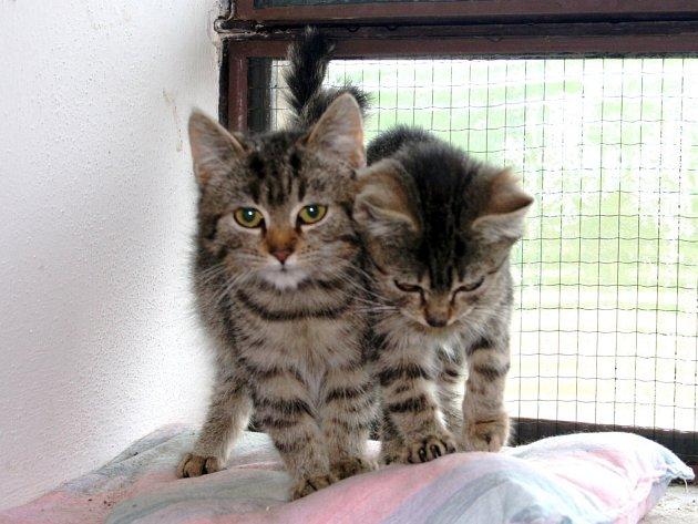 Koťata
