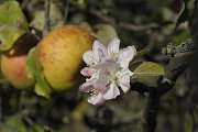 Příroda v Podyjí se v polovině října chová jako na jaře.