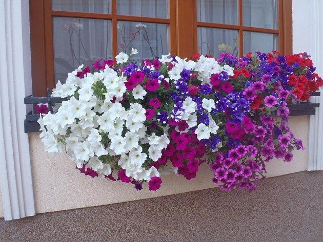 Nejlépe rozkvetlé okno měla Marie Pavelková.