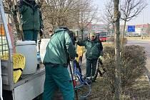 Znojmo je jedním ze čtyř měst v republice, kde výzkum vědci provádí. Oblast je nejsušší v republice. Na snímku pracovníci Městské zeleně při injektáži.