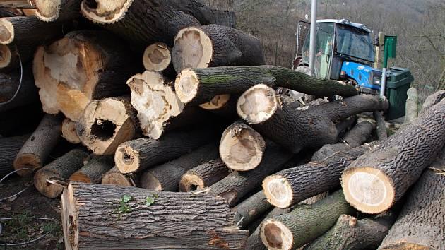 Kácení stromů ve Znojmě. Ilustrační foto.