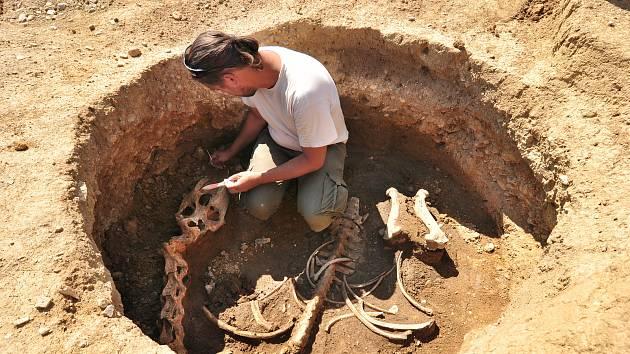 Kostru koně i pohřeb dítěte před 4 tisíci lety odkryly archeologické nálezy v lokalitě Na Kačence u Moravského Krumlova. Na snímku archeolog David Humpola.