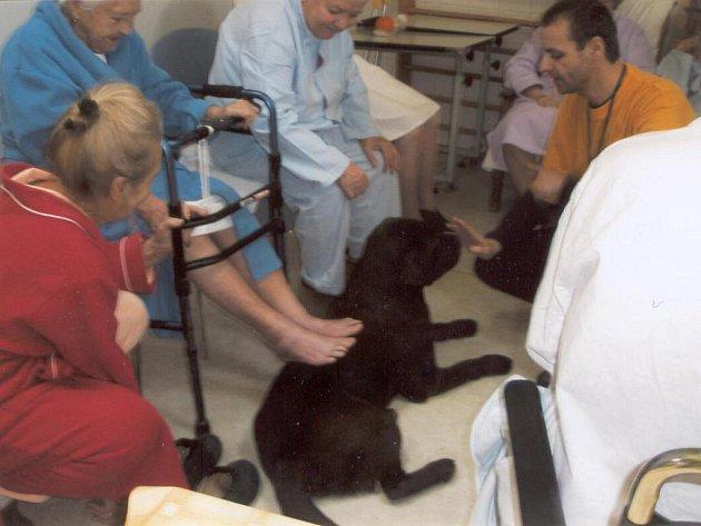 Znojemská nemocnice hledá dobrovolníky, kteří mají pomoci s péčí a vyplněním času dlouhodobě nemocných pacientů.