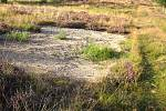 Cennou součástí vřesoviště jsou pionýrská stádia s holým povrchem půdy. Na těchto místech se s oblibou vyhřívá množství sarančí nebo zde hrabou své nory samotářské včely a pavouci.