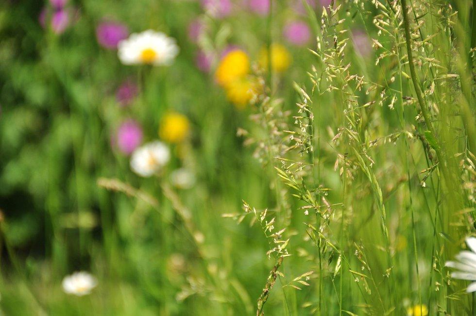 Trávy, břízy, akáty, louky. S příchodem teplých dnů rozkvetly všechny naráz. Alergici čelí velkému náporu pylů.
