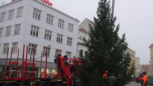 Letošní vánoční strom instalovali ve středu před polednem dělníci na Horním náměstí ve Znojmě.