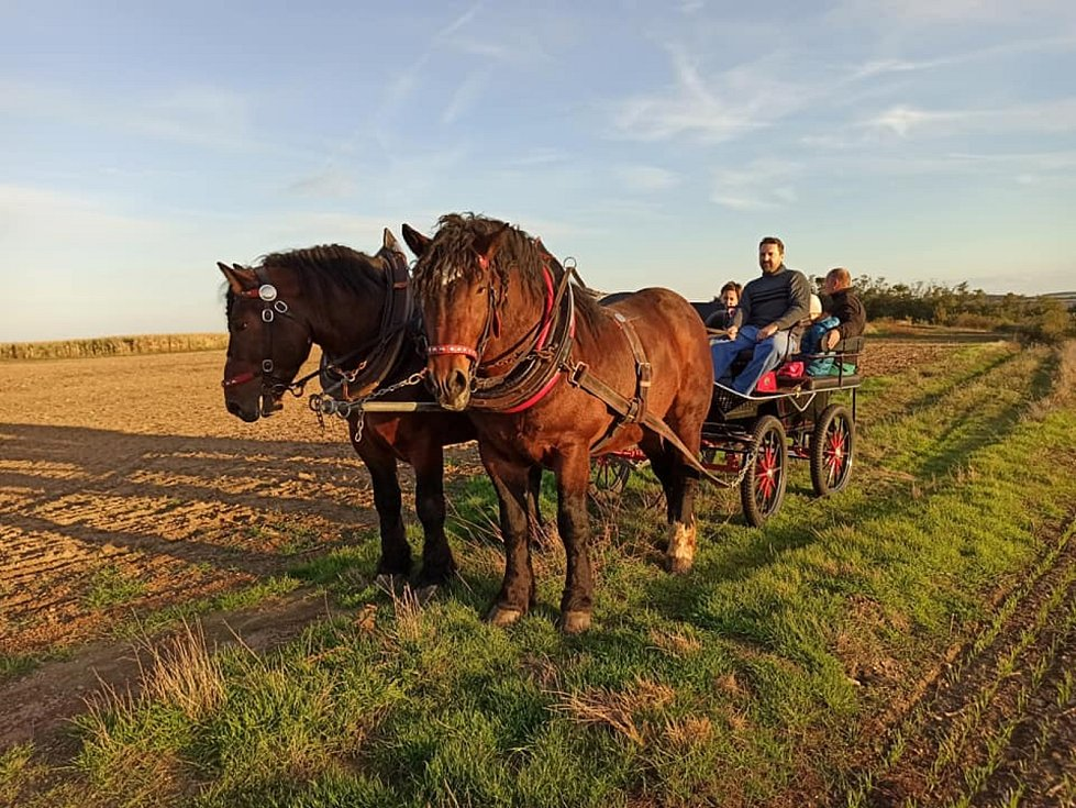 Nadšenec a chovatel koní Jiří Fousek z Rudlic na Znojemsku stahuje se svým Gavorem dřevo v Gránickém lese u Znojma.