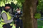 Ochrana proti škůdci bude zevnitř stromů.