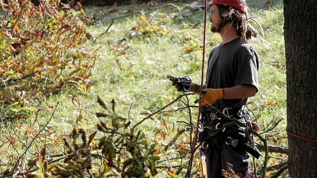 Odborníci ve Znojmě udržují stromy a zeleň. Ilustrační foto