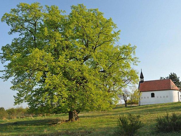 Kaple Panny Marie Bolestné stojící u třešňového sadu nedaleko Popic.
