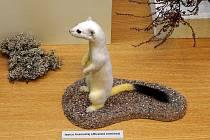 Expozice živé přírody Jihomoravského muzea ve Znojmě prošla po letech proměnou.
