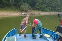 Ve Vranovské přehradě uhynuly tisíce ryb.