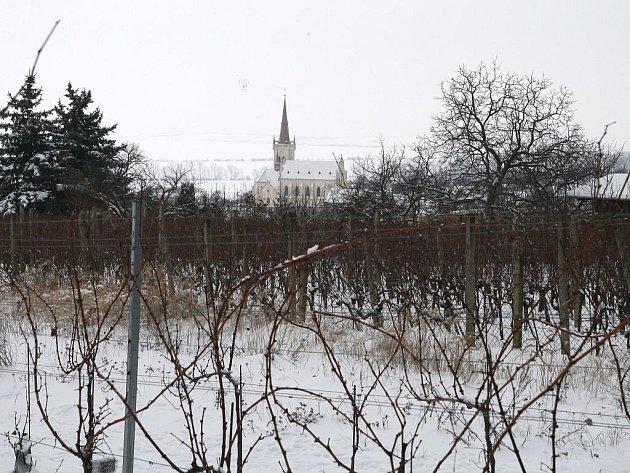 Vinaři od ledna provádí zmlazovací řez révy vinné
