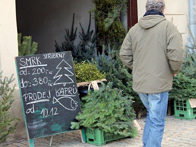 V ulicích Znojma se naplno rozjel prodej vánočních stromků. Prodejní ceny za jednotlivé druhy se oproti loňsku nijak nezměnily. Jedle je tradičně nejdražší, borovice a smrk jsou oproti ní výrazně levnější.