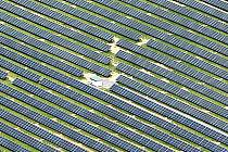 Nová fotovoltaická elektrárna v Hodonicích.