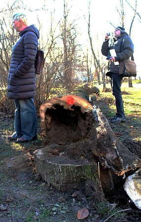 Uporaženého stromu, ve kterém zimovali netopýři, se sešli odborníci zčeské inspekce životního prostředí.
