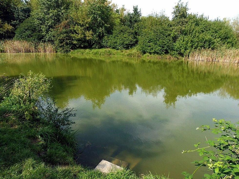 Rybník Hnědka.