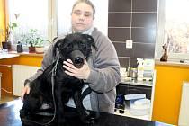 Také tento nový čtvernohý obyvatel psího útulku v Příměticích bude potřebovat o sivestrovské půlnoci kvůli petardám utišit.