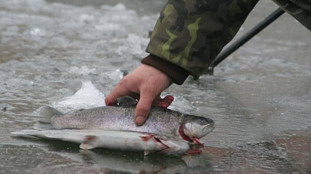 Rybáři lovili na ledu v Příměticích