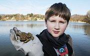 V národním parku zvou na vycházku za žabími námluvami. Ilustrační foto.