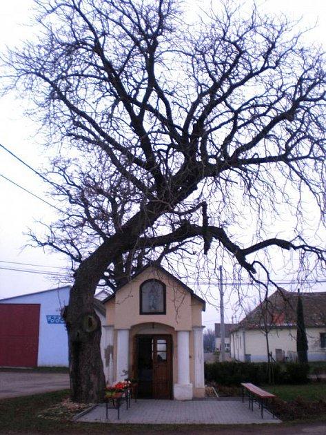 Na návsi Křídlůvek stojí opravená kaplička, kterou stíní ohromný strom.