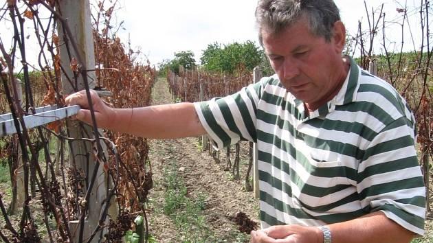 nešťastný vinař Jaroslav Dolský