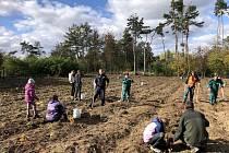Dvě stovky dobrovolníků přišly vysázet 11 500 mladých stromků v Mramoticích.