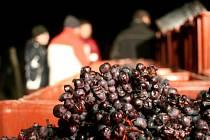 Silvestr pomohl s ledovým vínem
