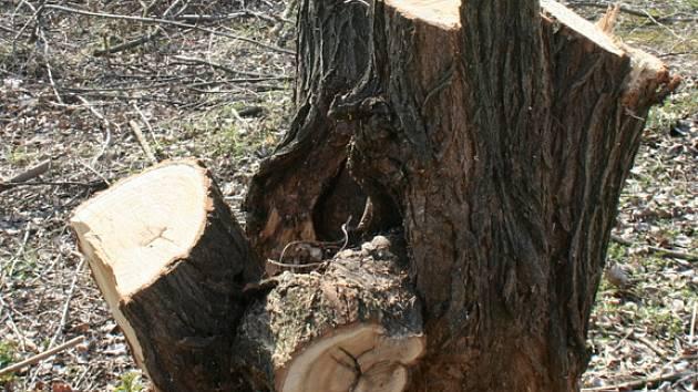 Ořezané stromy