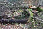 Nedělní vichr poničil ve Znojmě několik stromů v městských parcích a v Gránickém údolí.