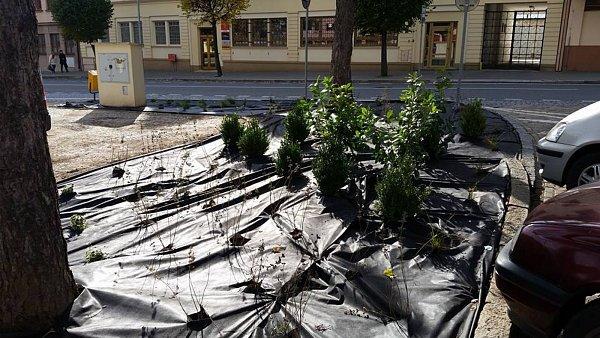 Náměstí T. G. Masaryka vMoravském Krumlově se dočká výměny zeleně.