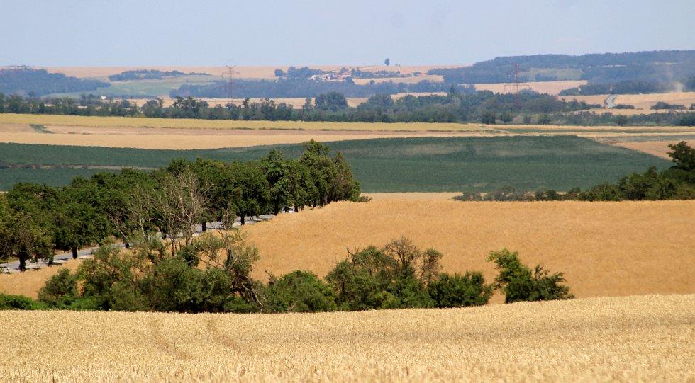 Na Znojemsku začaly žně. Výnosy negativně ovlivňilo sucho a také hlodavci.