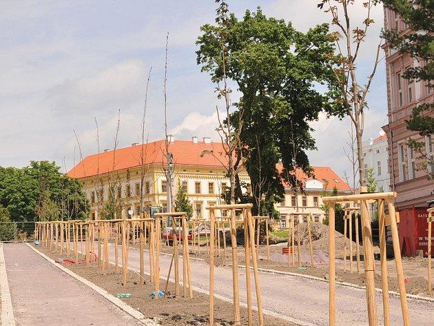 Více než polovina stromů v revitalizované části parku u gymnázia uschla.