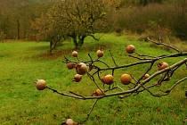 Péče o ovocný sad.