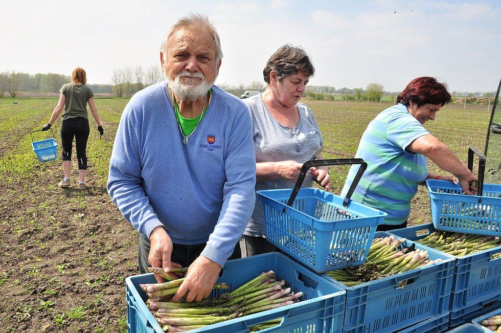 Chřest, lidově také špargl. V Hraběticích na Znojemsku začali se sklizní zeleného chřestu. Na snímku vlevo Jaroslav Bárta
