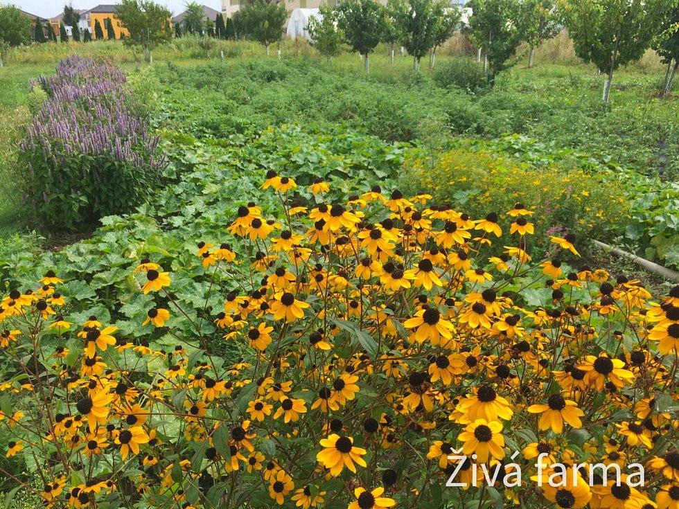 Libor Kožnar (na snímku) hospodaří na 11 hektarech v Šanově na Znojemsku. Pěstuje bio zeleninu, vysazuje větrolamy a dělá i kurzy pečení chleba.