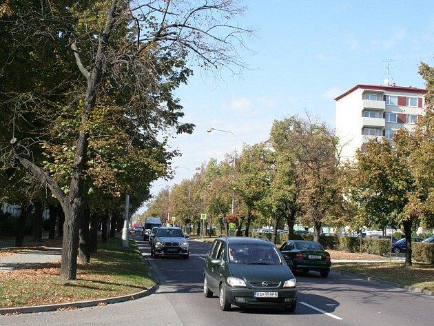 Lipová alej v Pražské ulici