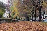 I v jiných městech se potýkali se spadeným listím.