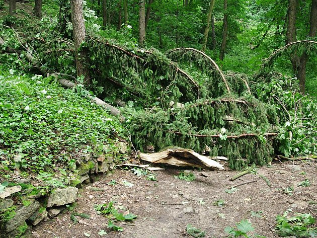 Bouře a silný vítr lámal stromy jako třísky. Ilustrační fotografie.