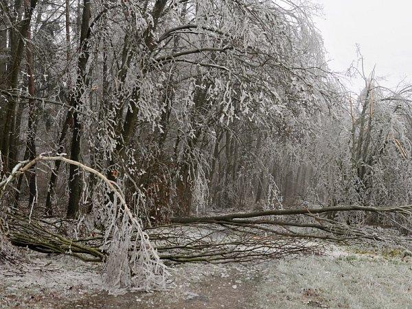Zlámané větve ohrožují turisty vPodyjí.